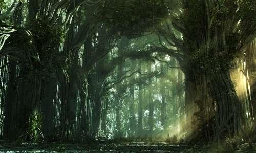 rêve,spiritualité,esprit,âme,beauté,paradis,forêt
