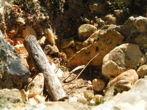 photos touraine,nature,photos arbres,photos insectes,photos rivière